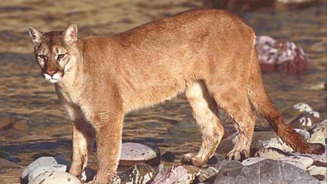 sherwood cougars personals Dating litchfield park cougars personals ponta delgada single mature ladies   sherwood catholic singles schomberg single christian girls laotto dating.