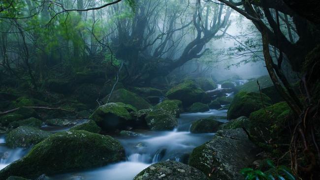 Yakushima Is A Japanese Island Eco-paradise, Filled With