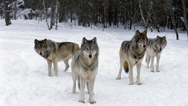 世界上最危险的15种动物排名----结果令人意外