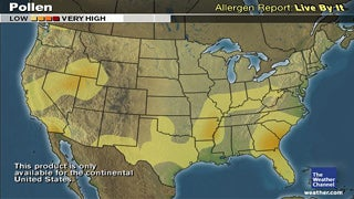 Pollen Activity