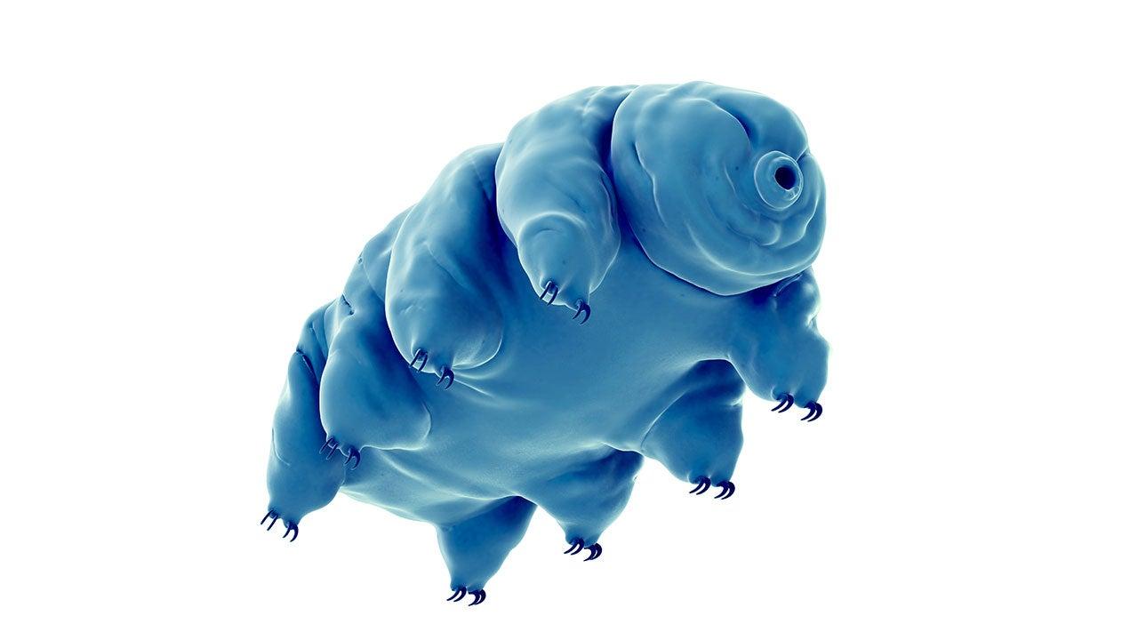 water bears u0026 39  radiation