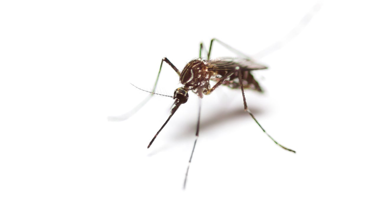 Mosquitoes Are the Worst in These 10 U.S. Cities