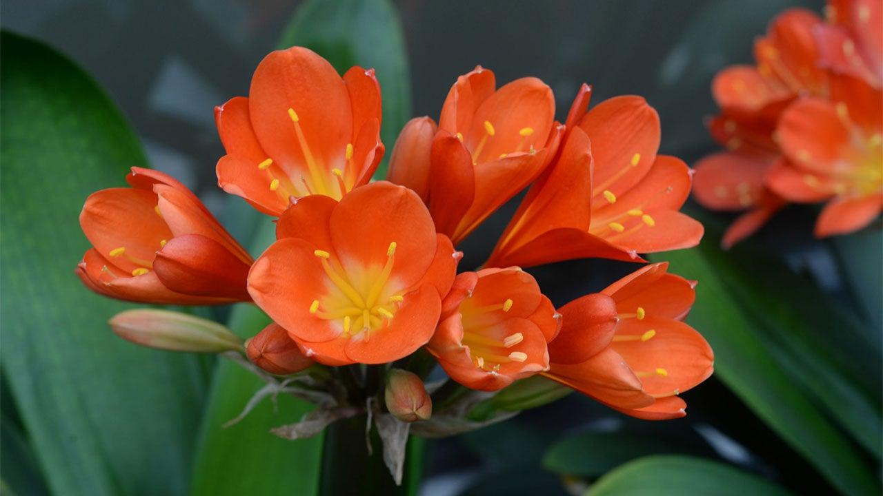 Heuschnupfen: Diese Blumen sind für Pollenallergiker garantiert ungefährlich