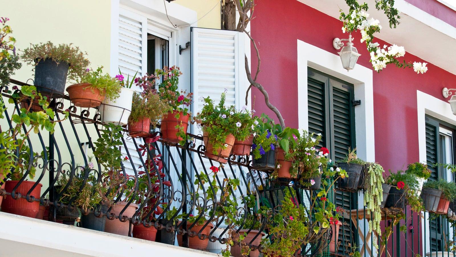 pflegeleichte pflanzen f r balkon terrasse und wohnung. Black Bedroom Furniture Sets. Home Design Ideas