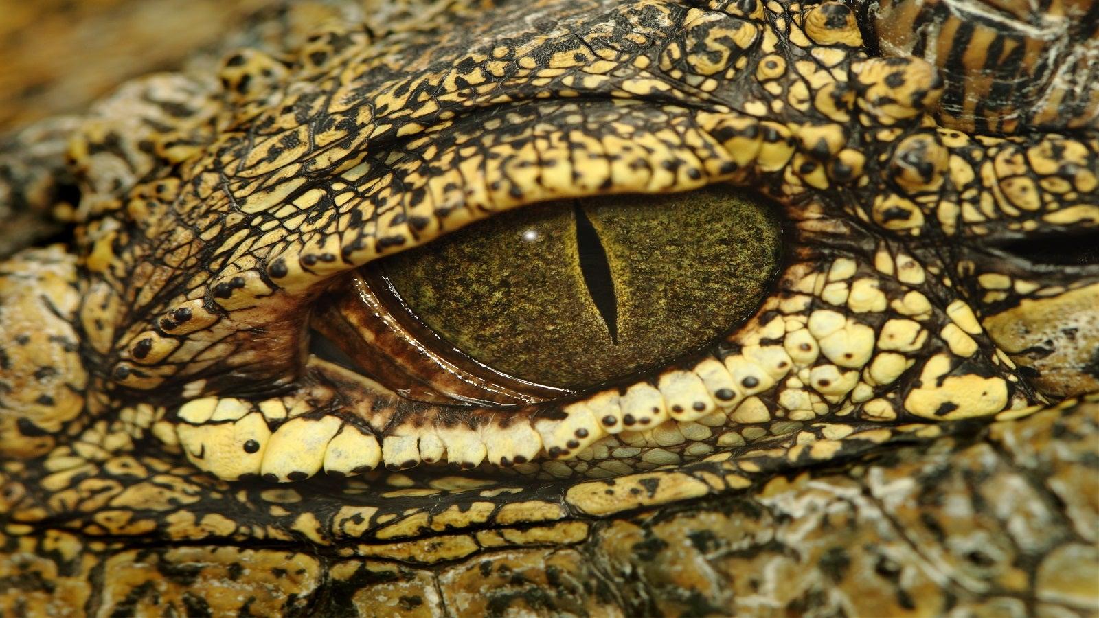 Gefährlicher Spielkamerad - Urlauberkinder holen Alligator aus See   The Weather Channel - Artikel von The Weather Channel   weather.com