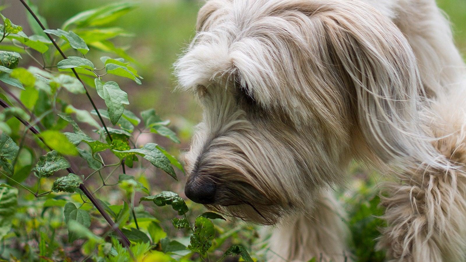 Spürnasen: In Berlin sollen Hunde Allergikern helfen
