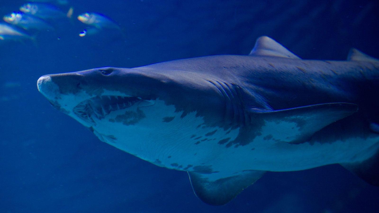 Zahn aus Bein entfernt: Zwei Kinder im US-Staat New York von Hai gebissen