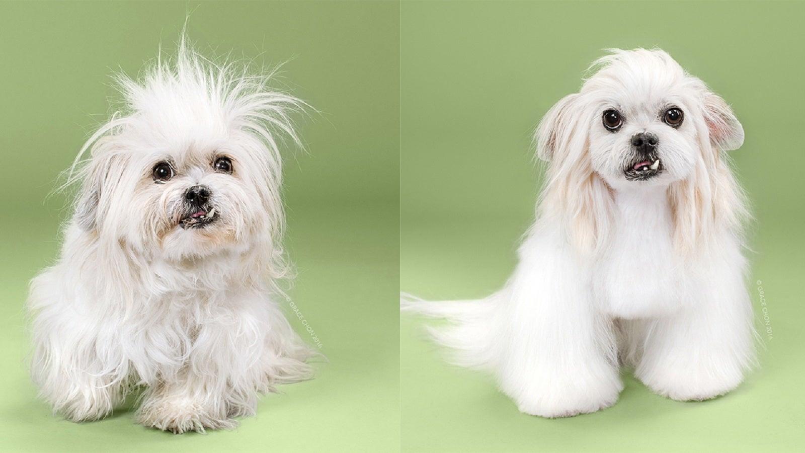 Vorher-Nachher: Würden Sie diese Hunde wiedererkennen?