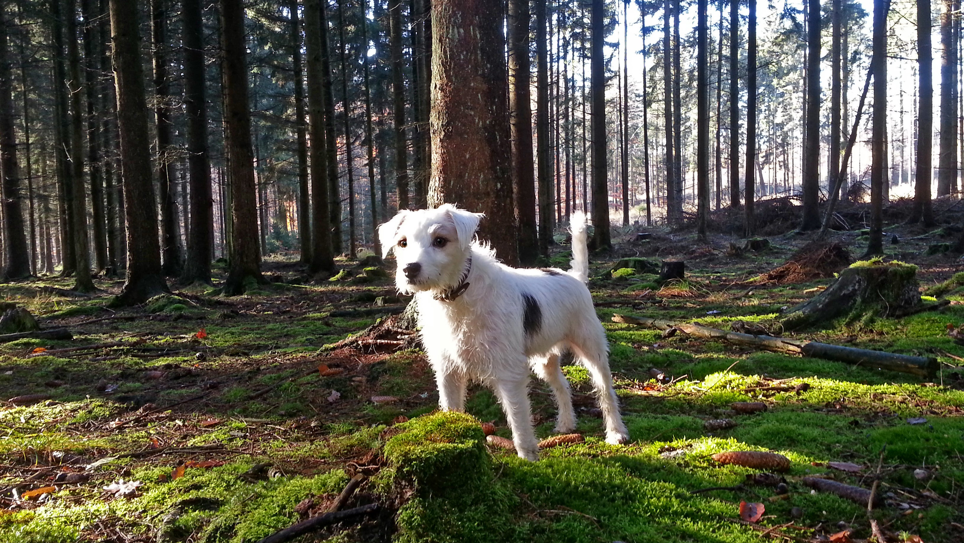 south gate ca 90280 10 day weather forecast the weather