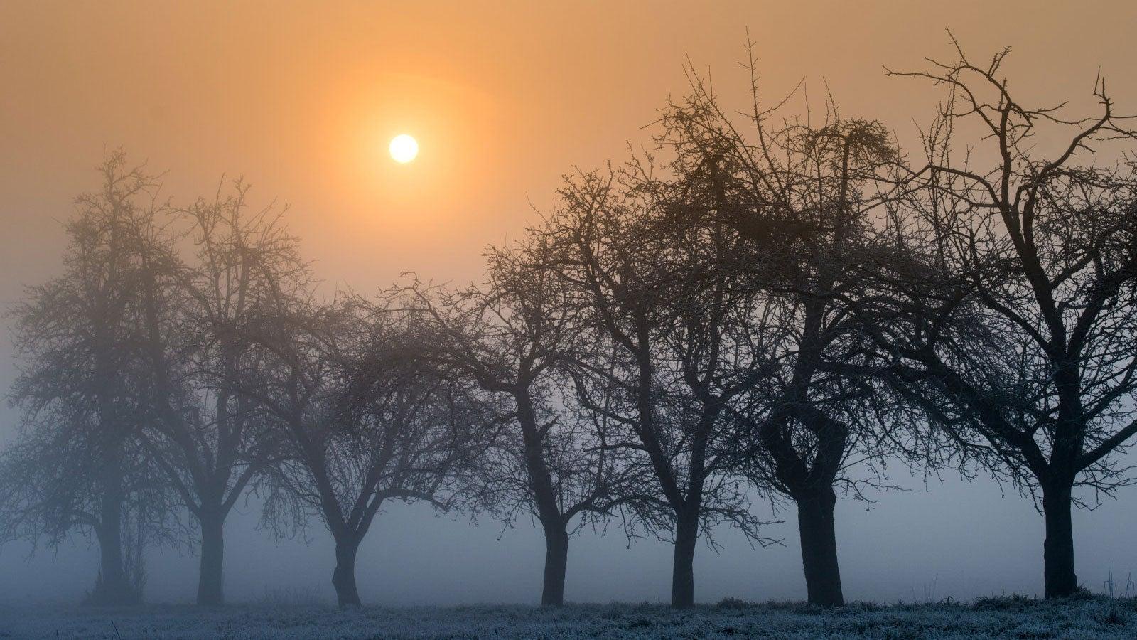 Taupunkt: So entstehen Nebel, Reif und Wolken