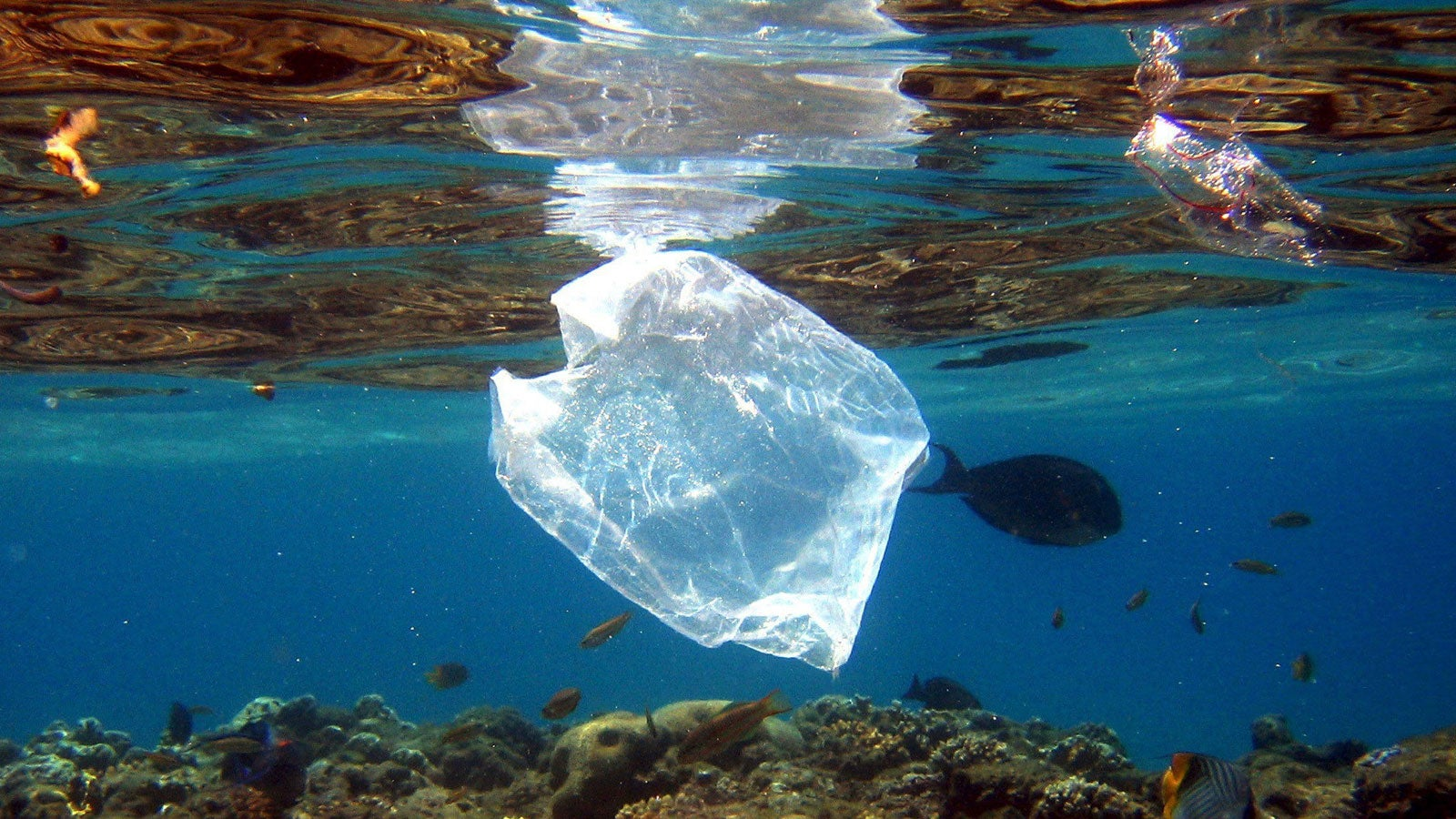 Aus für Gratis-Plastiktüten in Australien: Kunde geht Mitarbeiterin an die Gurgel