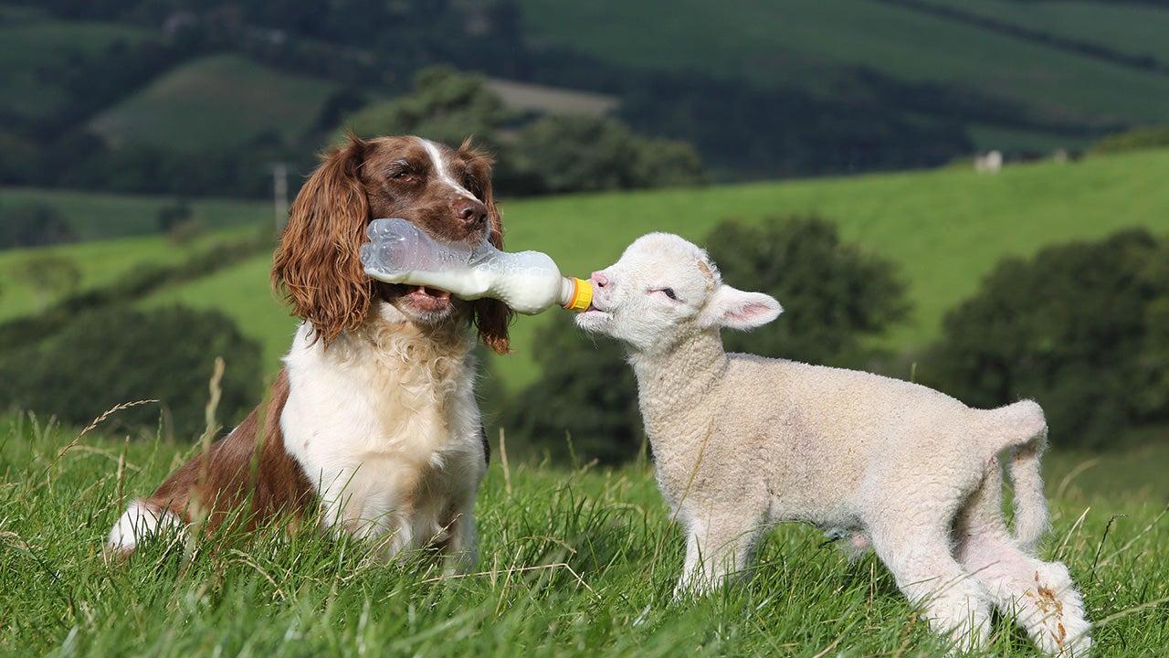 Auch unter Tieren gibt es die Liebe fürs Leben