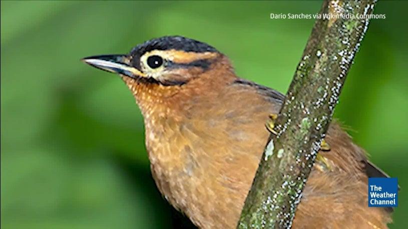 Several Species Went Extinct in 2018