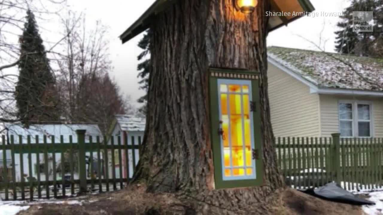 Tree Stump Transformed into a 'Branch' Library