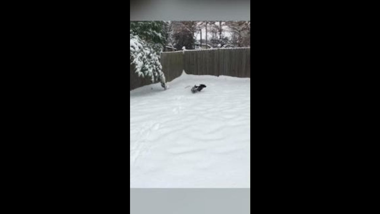 Parker Co Weather >> Parker The Dog Loves St Louis Snow The Weather Channel