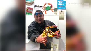 Rare Calico Lobster Shows up at Seafood Market