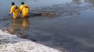 Firefighters Rescue Deer From Frigid Water in Lake Olathe