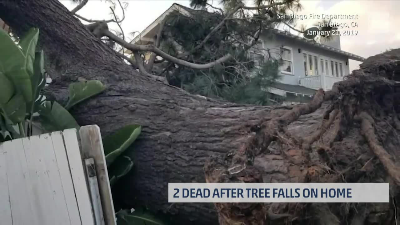 Two Dead After High Winds Send Massive Tree Onto San Diego Home