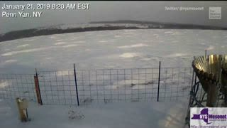 Snow Waves Spotted in Upstate New York