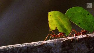 Insect Population Declines Threatening World Ecosystems