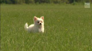 nws issues  u2018small dog warning u2019 in windy ohio  pennsylvania