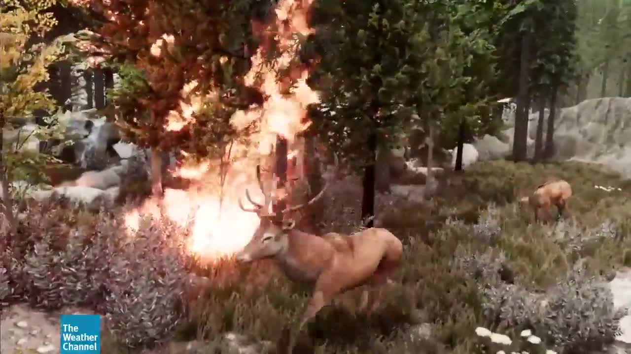 How Climate Change is Impacting Wildfires