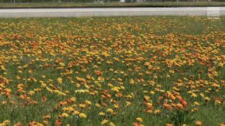 Super Bloom of Wildflowers Greets Visitors at LAX