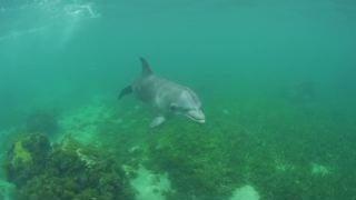 Toxic Algae Blooms Causing Brain Disease in Dolphins?