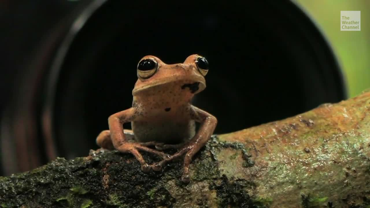 Mushroom extinguishes frogs that are worse than expected