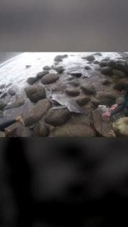 Surfers Rescue Baby Shark