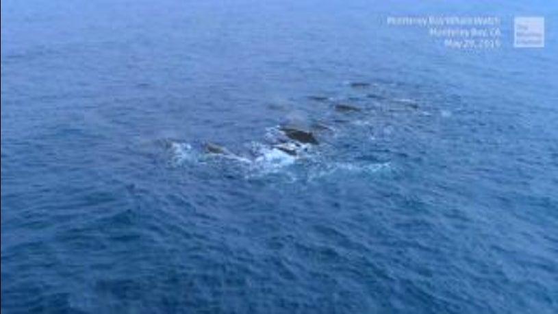 Riesige Gruppe seltener Wale vor Kalifornien gesichtet