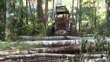 Brazilian Amazon Rainforest Is Losing Trees at an Alarming Rate