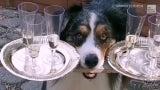 Wenn der Hund die Gäste bedient: Die besten Tiervideos der Woche