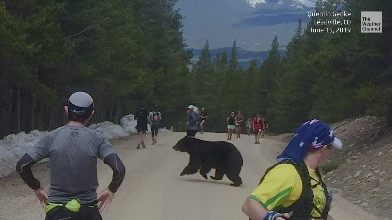 Damit hat wohl keiner gerechnet: Bei einem Marathonlauf in Colorado taucht plötzlich ein Bär aus dem Wald auf. Teilnehmer bleiben schockiert stehen und warten, wie das Tier auf die Läufer reagieren wird.