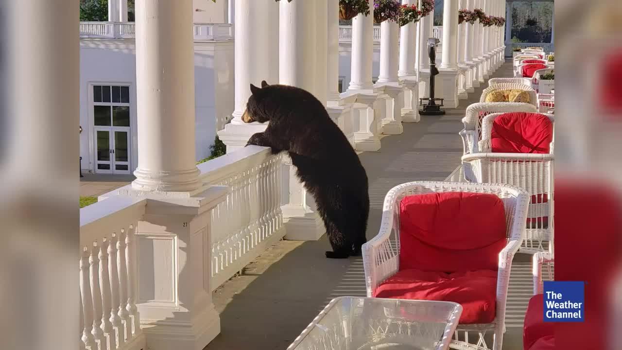 Als ein Mitarbeiter des Hotels den Sonnenaufgang fotografieren wollte, stößt er auf einen äußerst pelzigen Gast, der den Aussichtspunkt bereits eingenommen hatte.