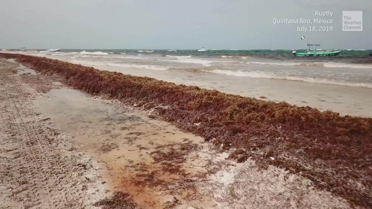 Stinky, Rotting Seaweed Ruins Popular Beaches