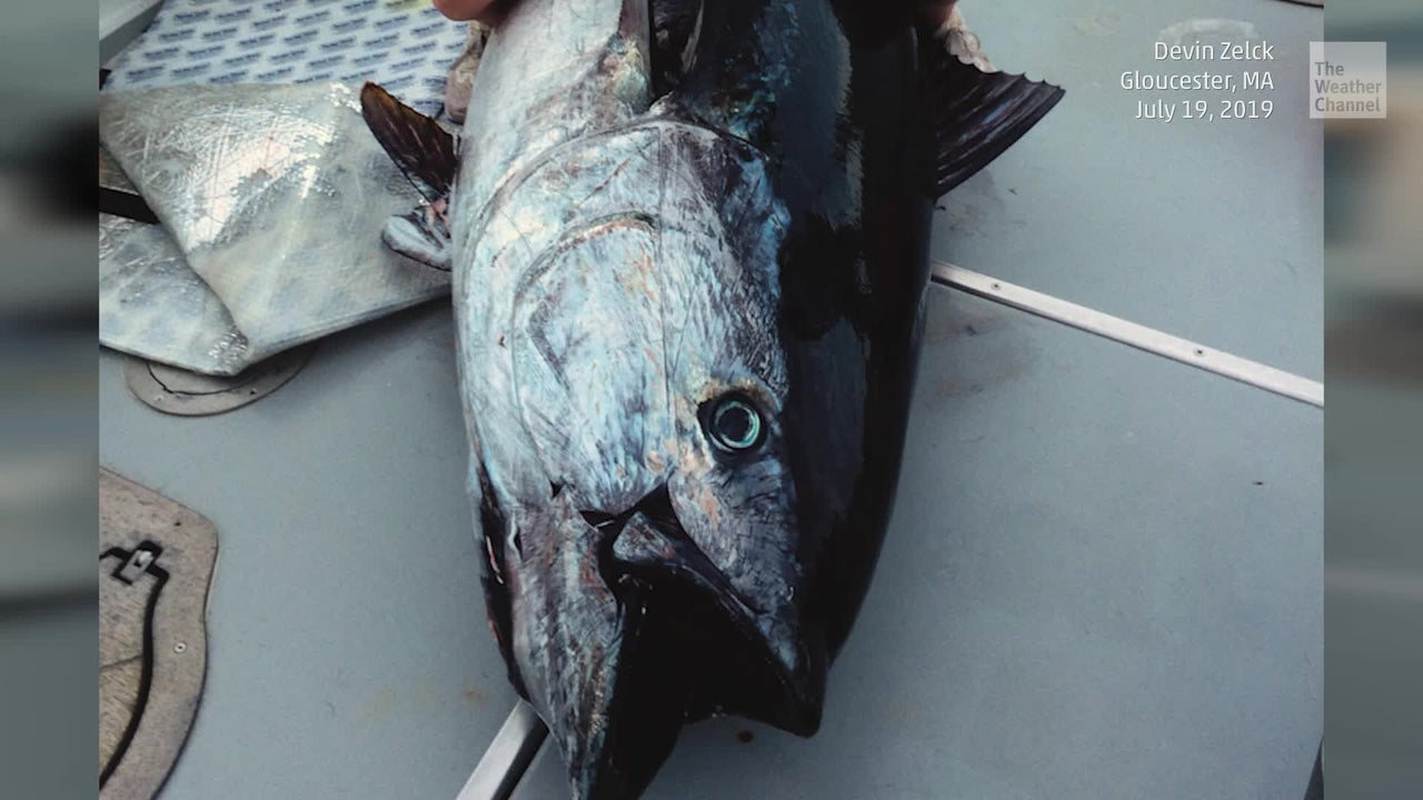 Teen Catches Seriously Huge Tuna