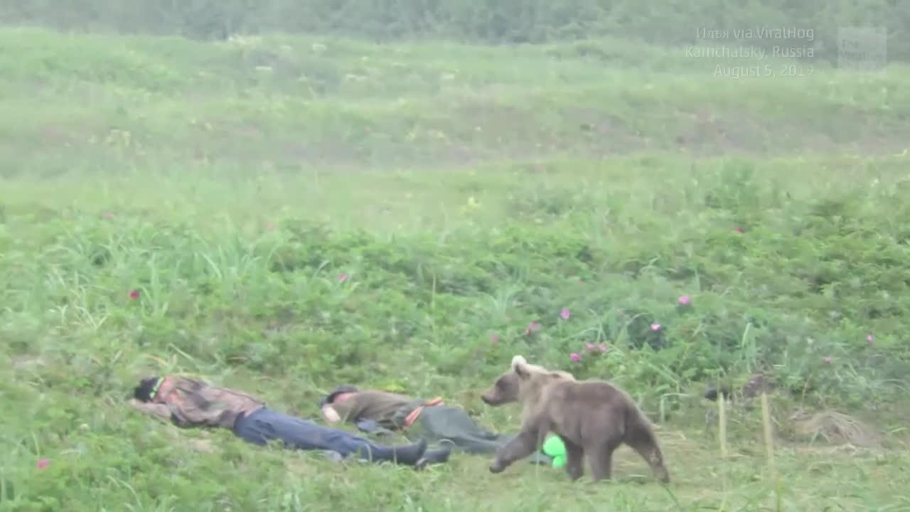 Damit hatten sie nicht gerechnet: Männer werden von kleinem Bär geweckt