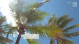 Invasive 'Lethal Bronzing' Disease Killing Florida's Palm Trees
