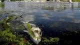 Indiana Chemical Spill Causes Fish Kill on Lake Michigan