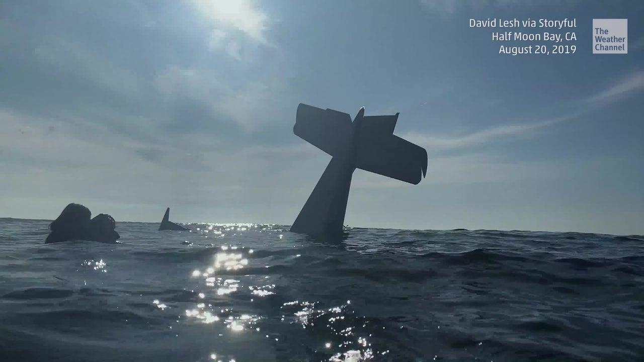 Der Amerikaner David Lesh musste bei einem Überflug in der Nähe von San Francisco eine Bruchlandung auf dem offenen Meer hinlegen. Statt Lobes für sein Flugkönnen, muss der Amerikaner Kritik einstecken. Der abenteuerliche Absturz wirft Fragen auf.
