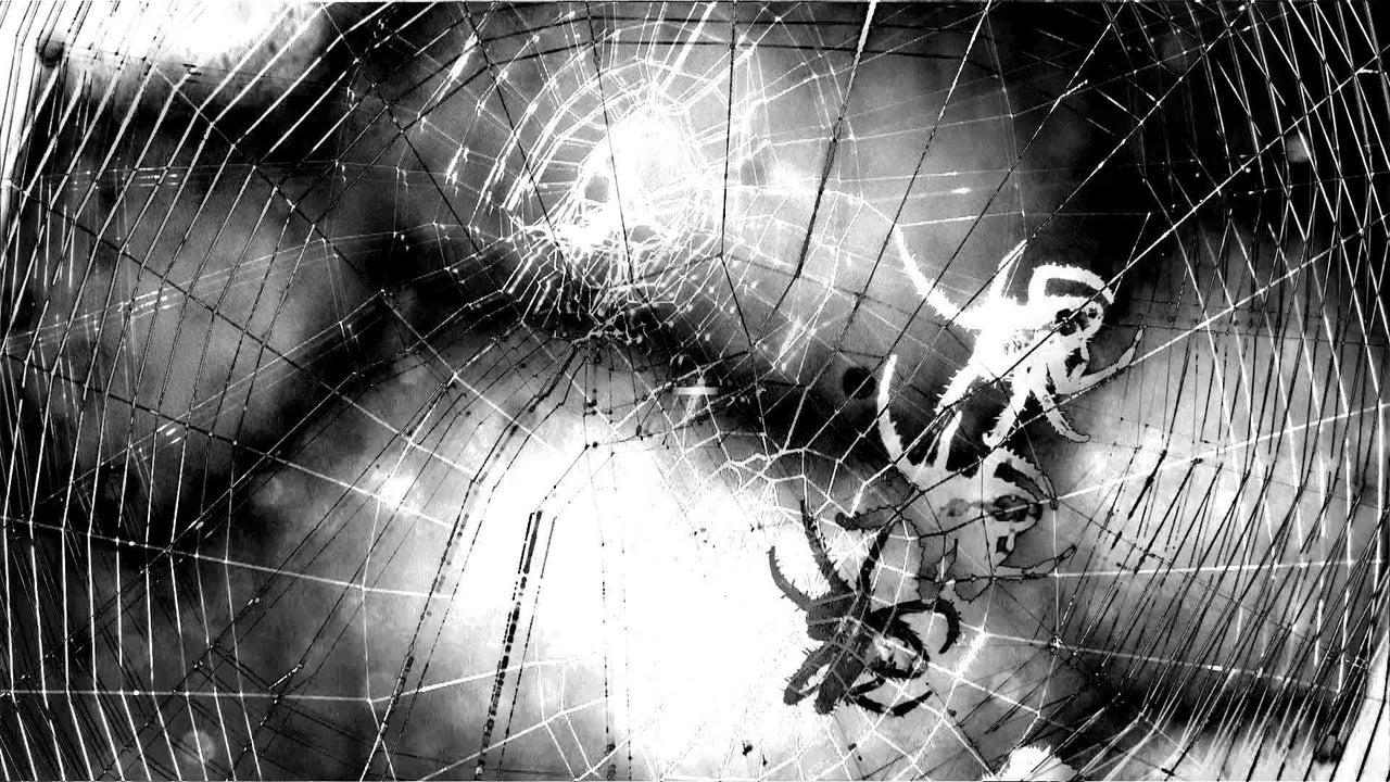 Ciclones tropicales hacen enojar a las arañas