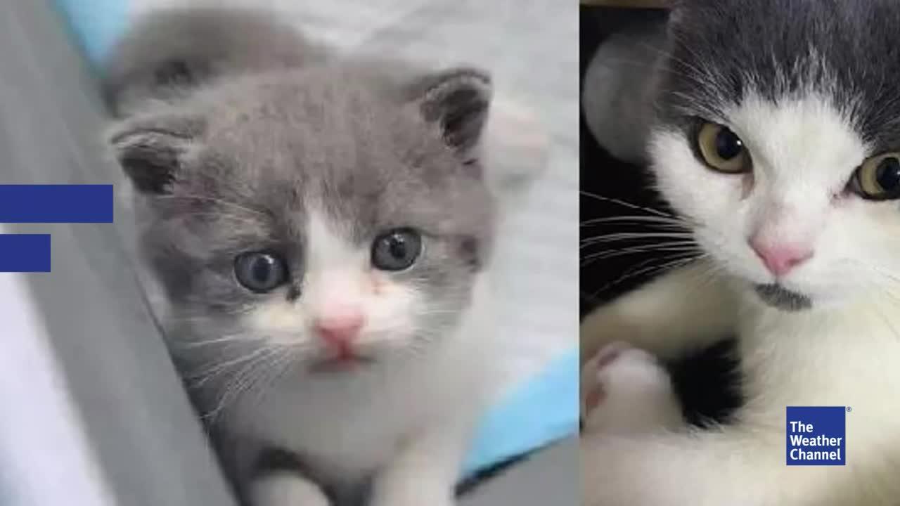 Katze stirbt an Infektion: Firma klont Tier für Besitzer