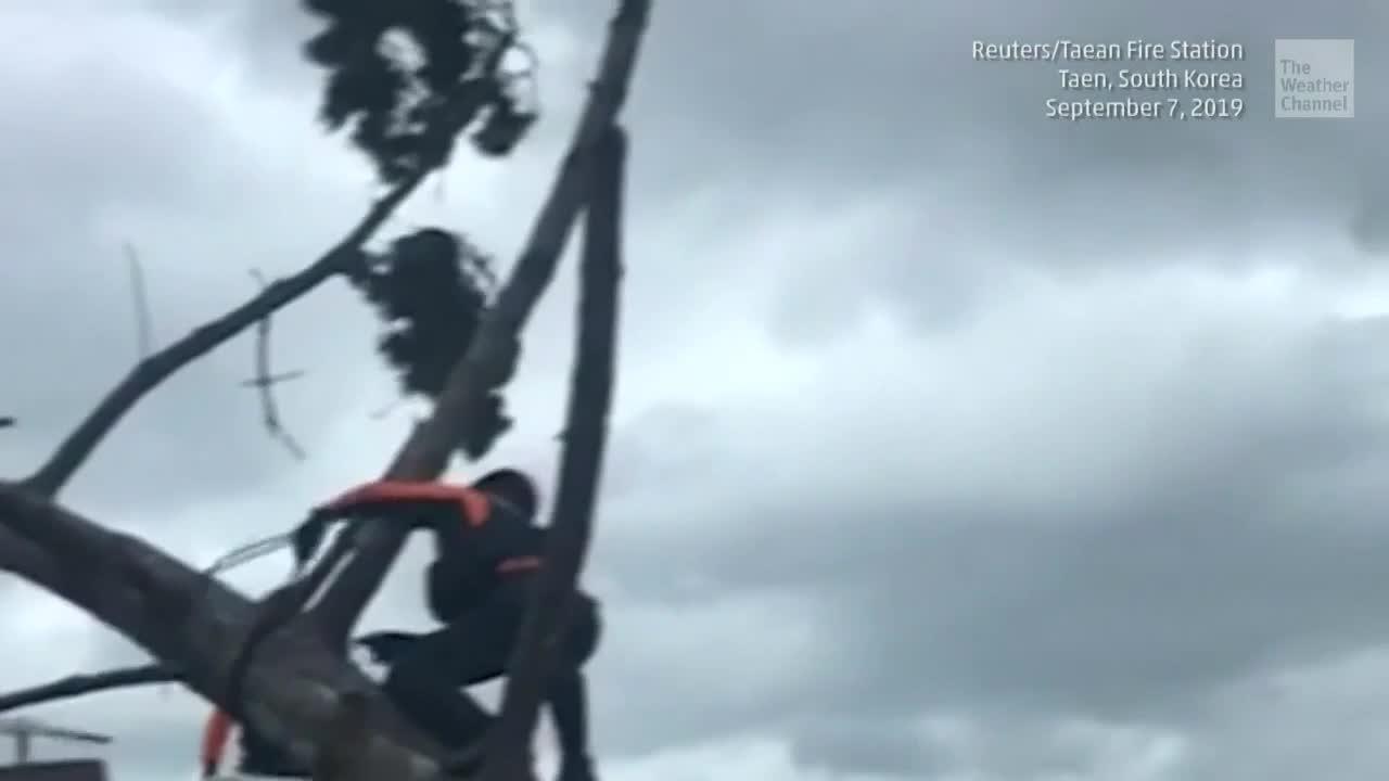 Typhoon Lingling Kills 3 as It Passes South Korea
