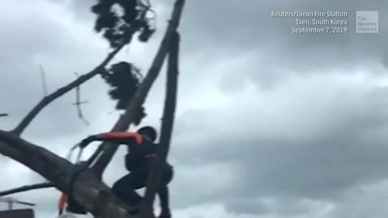 Typhoon Lingling Kills 3 at It Passes South Korea