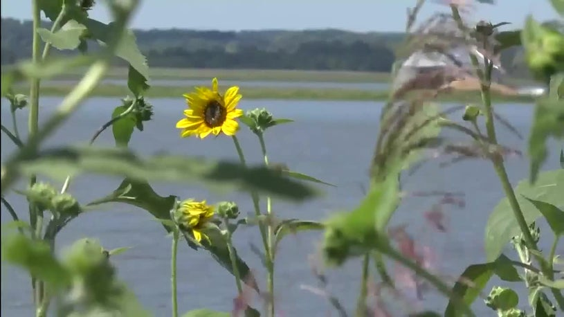 Lost Growing Season for Iowa Farmers After Spring Flooding