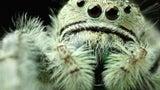 Ändert ihr Verhalten: Hurrikane machen Spinnenart aggressiver