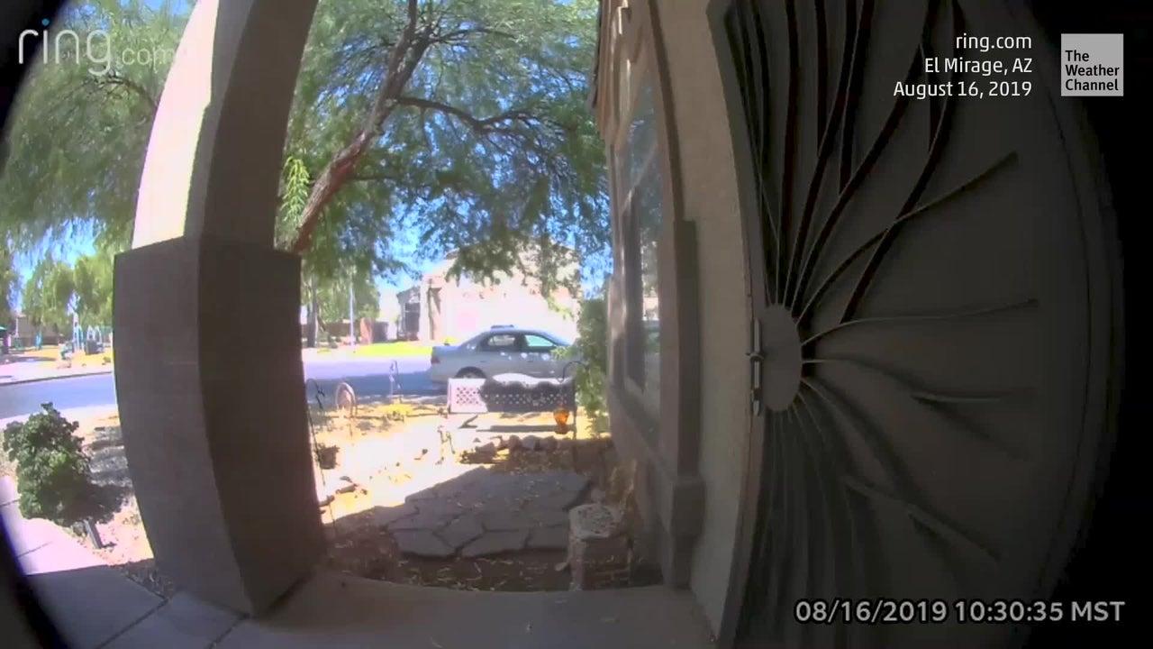 Kluger Vogel: Eine Kamera im US-Bundesstaat Arizona hält fest, wie ein Specht selbstständig an einer Haustür klingelt.