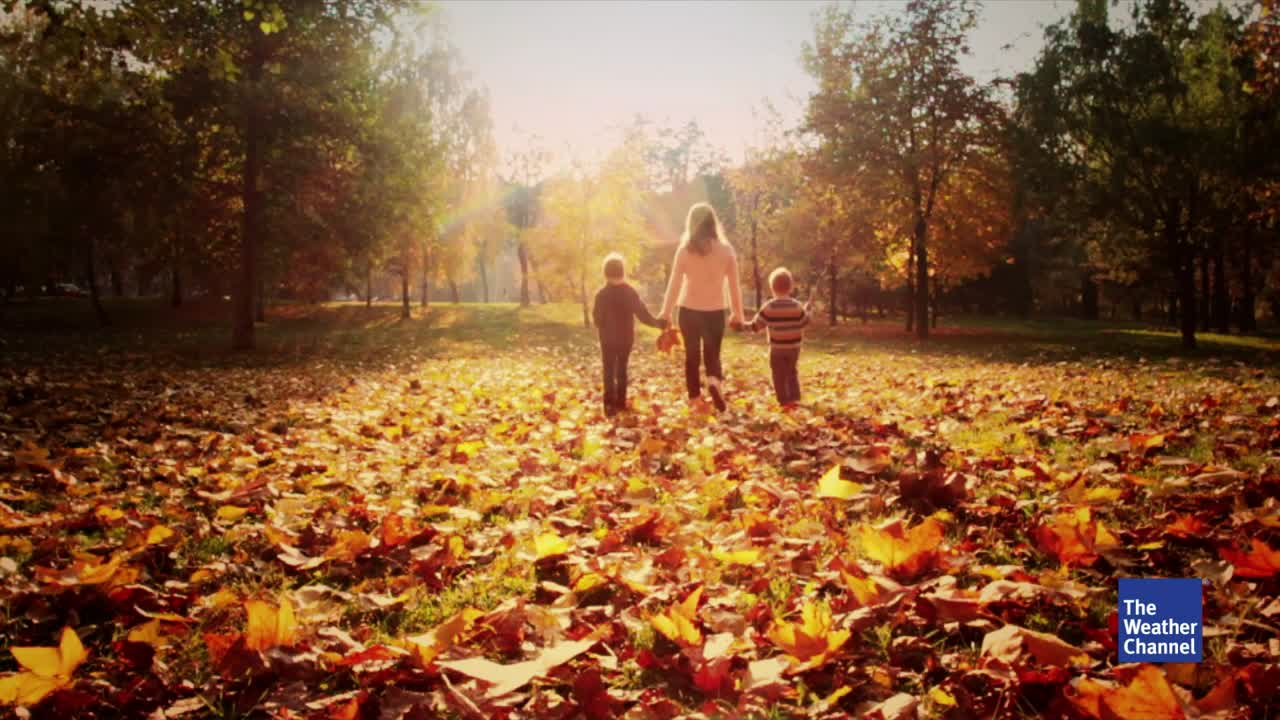 Wer bald durch buntes Laub und kühle Wälder laufen will, sollte auch im Herbst auf Zecken achten. Denn die Tiere sind noch bin November aktiv. Wir geben einen Überblick, wo sich die Tiere jetzt verstecken.