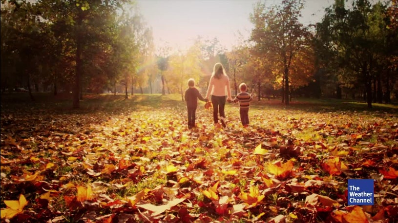 Pilze bis Herbstlaub: Wo sich Zecken jetzt verstecken – und auf was Sie achten müssen